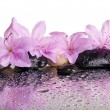 Flowers and black stones with reflection — Stock Photo #53559819