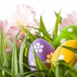 Easter Eggs with flower on Fresh Green Grass — Stock Photo #69190879