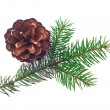 Pine cone with branch isolated on white background — Stock Photo #60748997
