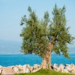 Town of Salo on Lake Garda, Italy — Stock Photo #58738291