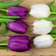 Purple tulips flowers on old wood with empty space for layout or text in spring concept decoration — Stock Photo #68364889