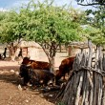 Himba village with traditional huts near Etosha National Park in Namibia, Africa — Stock Photo #84555572
