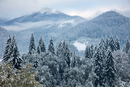 Winter trees in the mountains