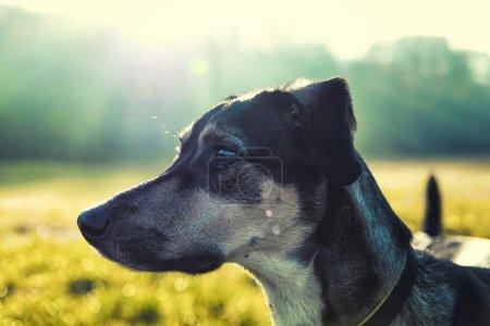 狗侧面肖像
