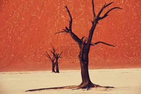 纳米布沙漠的死谷