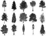 集或集合的常见的树木,黑色的剪影-3d 渲染