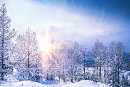 美丽的冬天风景