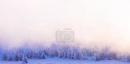 Beautiful winter forest border