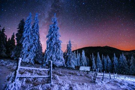 在冬天的树林的乳品星际迷航