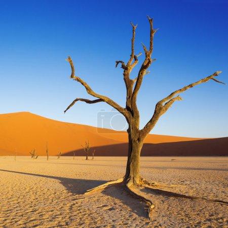 沙漠的沙丘上