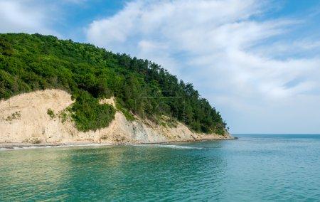 岩石由森林满足海