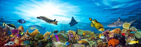 colorful coral reef with many fishes