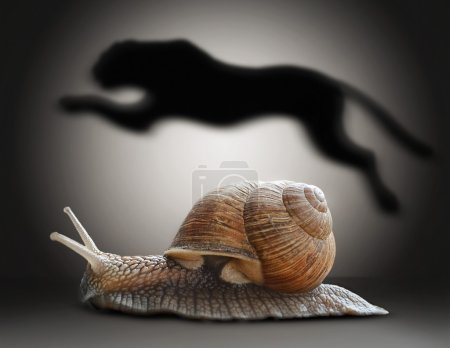 Snail with cheetah shadow. Concept graphic in soft vintage style