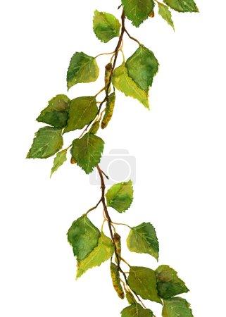 用绿色新鲜的叶子的桦木科边境条纹_高清图片_邑石网