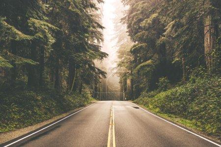Foggy Redwood Highway