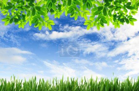 绿草和绿叶与蓝蓝的天空背景_高清图片_邑石网