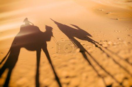 骑骆驼的影子,西撒哈拉摩洛哥