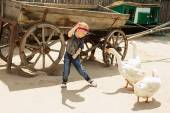 Urban boy playing and having fun with geese on a farm