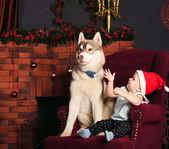 玩的小女孩和哈士奇狗介绍了在圣诞装饰品